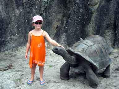 la tortue Qul1d1hg